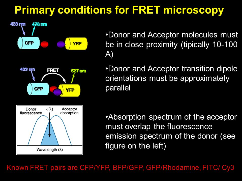 Primary conditions for FRET microscopy