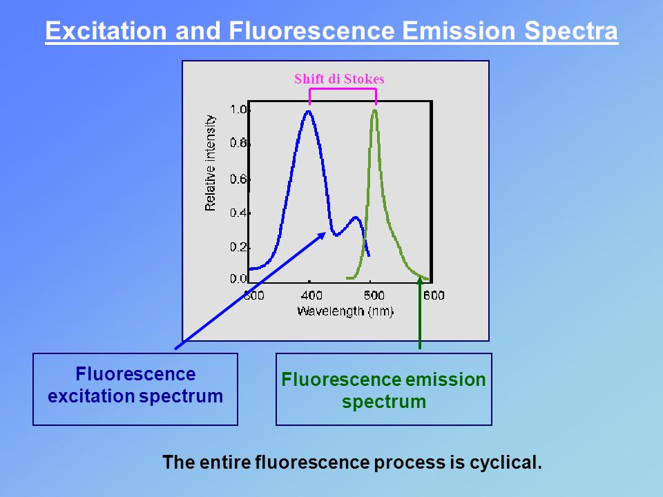 Excitation and Fluorescence Emission Spectra