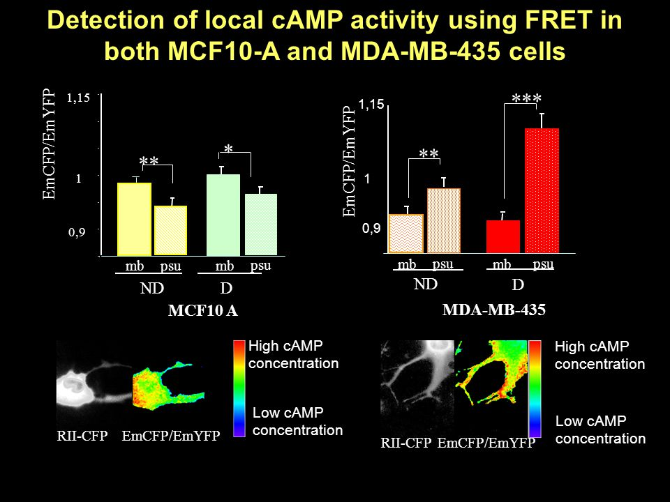 Detection of local cAMP activity using FRET in both MCF10-A and MDA-MB-435 cells