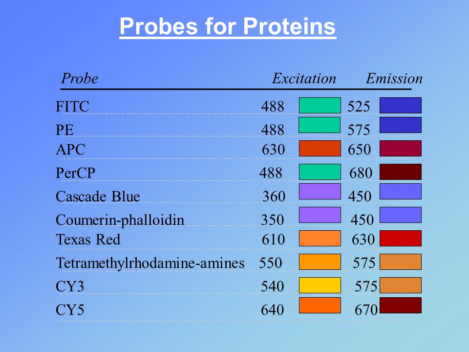 Probes for Proteins Probe Excitation Emission FITC 488 525 PE 488 575