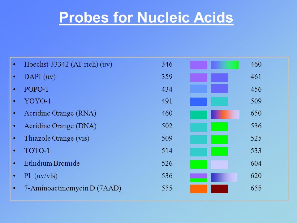 Probes for Nucleic Acids