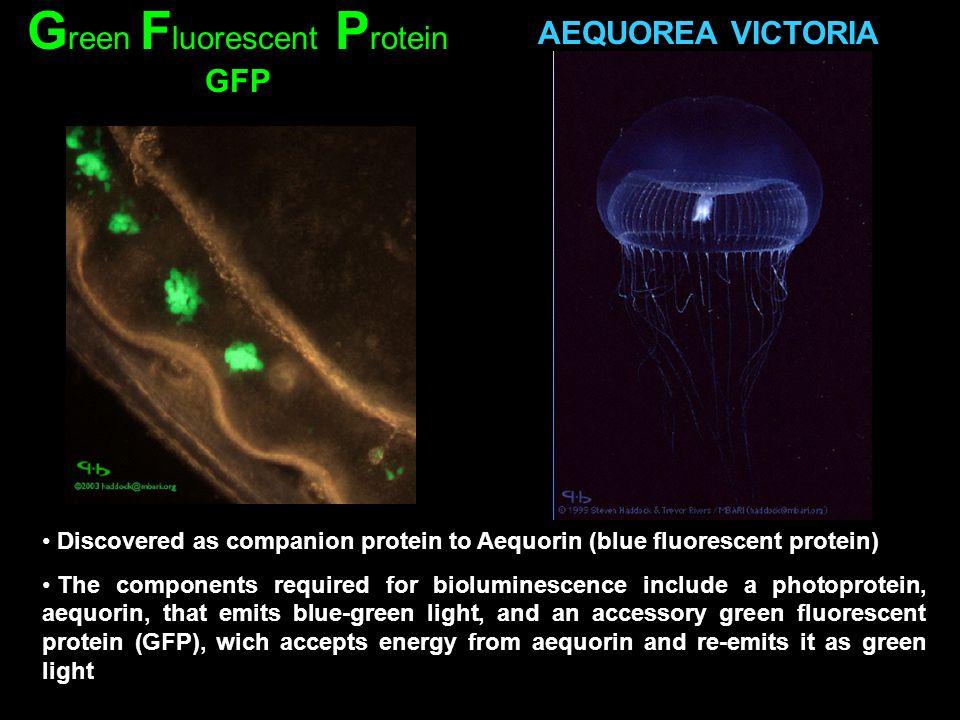 Green Fluorescent Protein