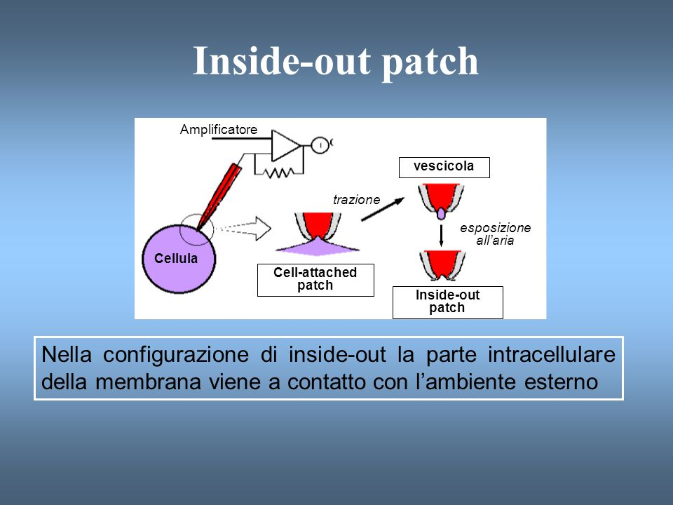 Inside-out patch Amplificatore. Cellula. Cell-attached. patch. Inside-out. trazione. vescicola.