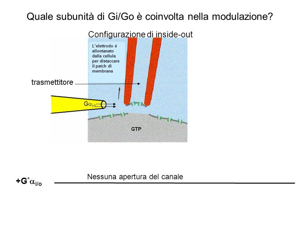 Quale subunità di Gi/Go è coinvolta nella modulazione