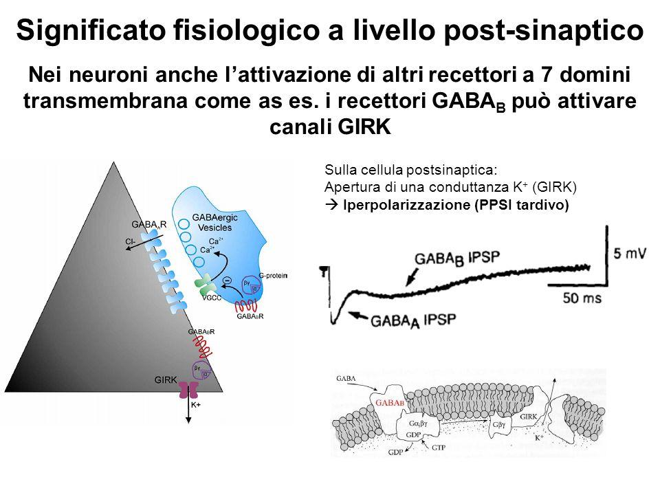 Significato fisiologico a livello post-sinaptico