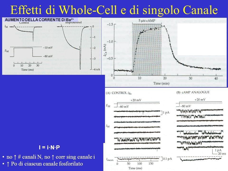 Effetti di Whole-Cell e di singolo Canale