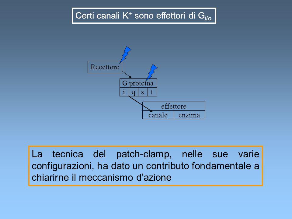 Certi canali K+ sono effettori di Gi/o