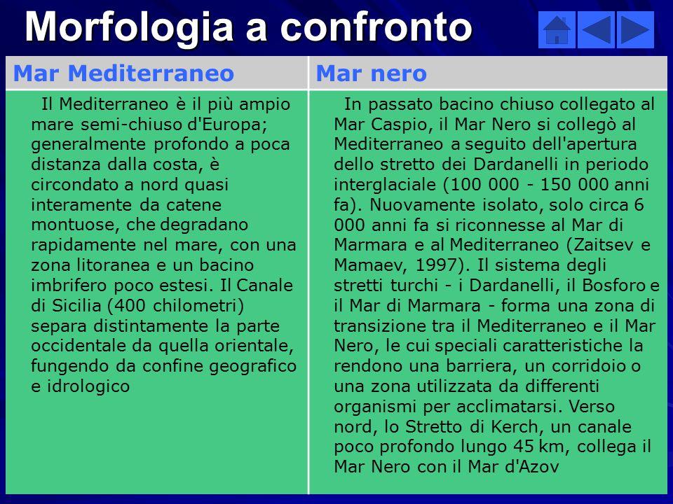 Morfologia a confronto