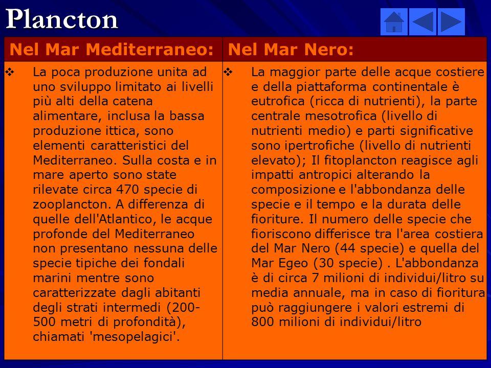 Plancton Nel Mar Mediterraneo: Nel Mar Nero: