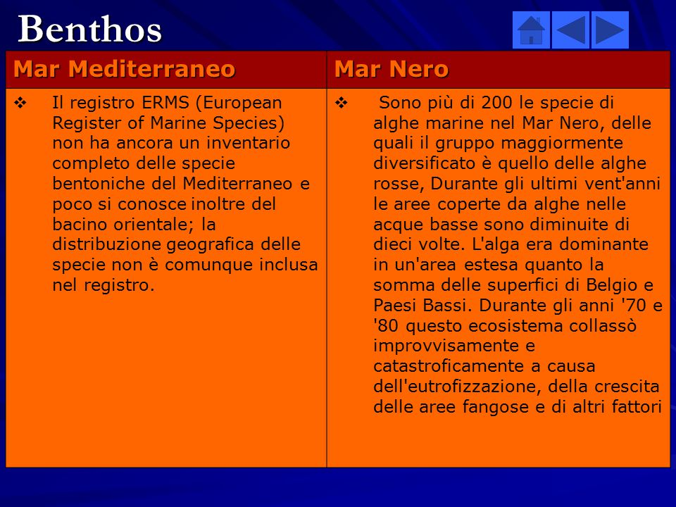 Benthos Mar Mediterraneo Mar Nero