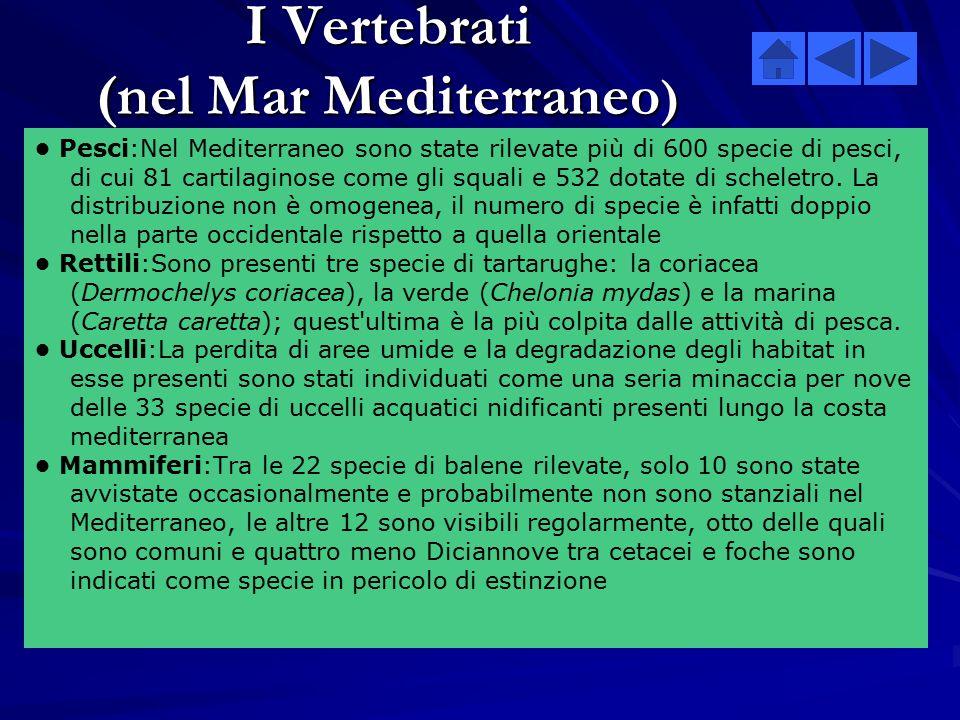 I Vertebrati (nel Mar Mediterraneo)