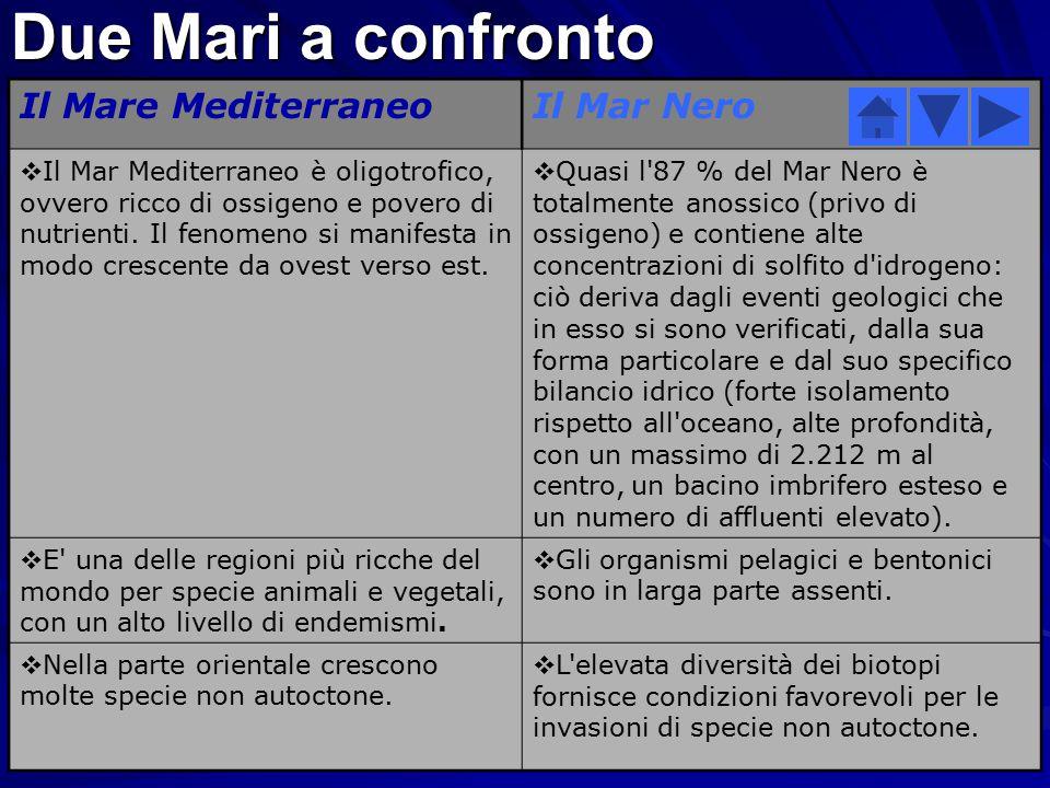 Due Mari a confronto Il Mare Mediterraneo Il Mar Nero