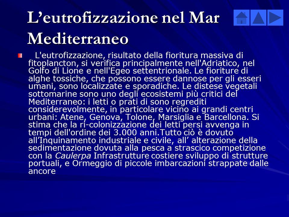 L'eutrofizzazione nel Mar Mediterraneo
