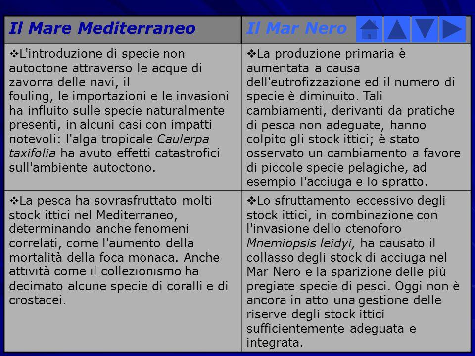 Il Mare Mediterraneo Il Mar Nero