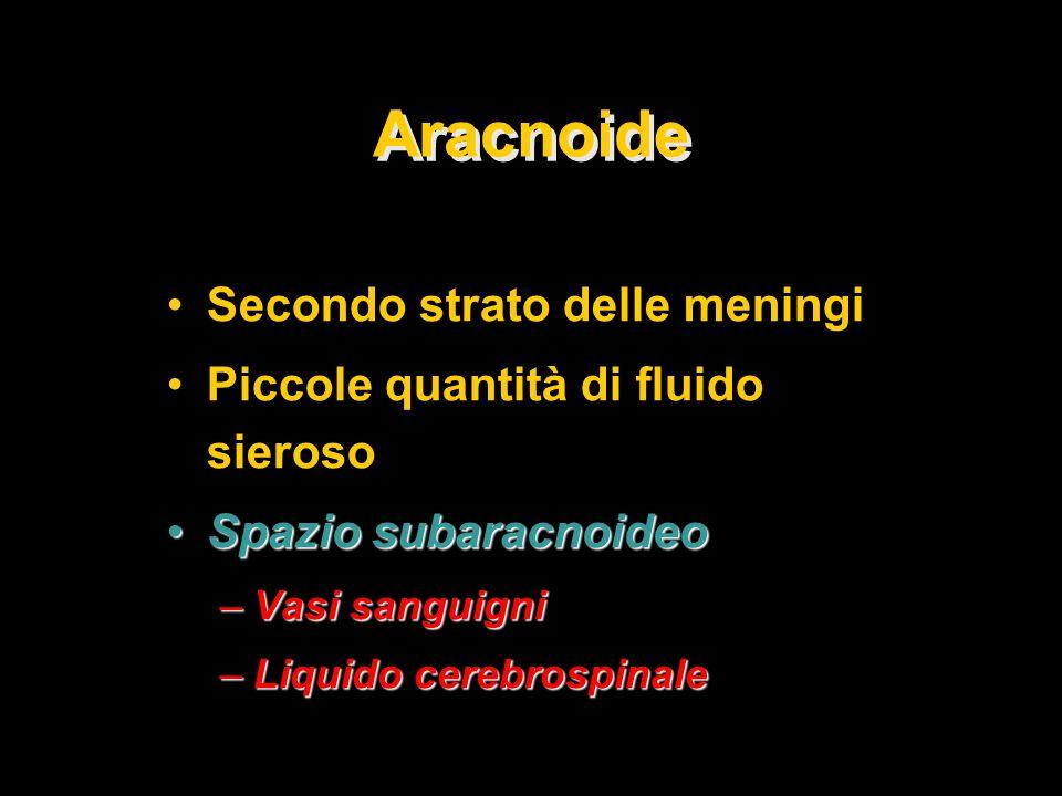 Aracnoide Secondo strato delle meningi