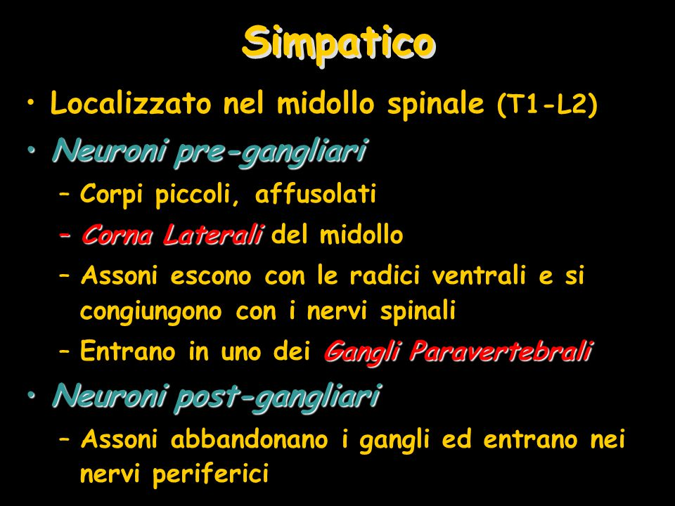 Simpatico Localizzato nel midollo spinale (T1-L2)