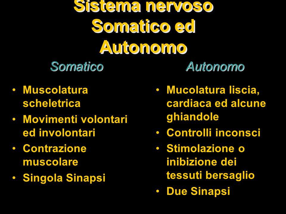Sistema nervoso Somatico ed Autonomo
