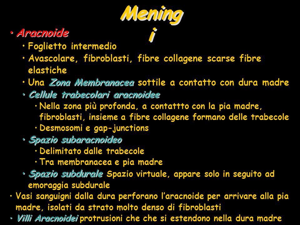 Meningi Aracnoide Foglietto intermedio