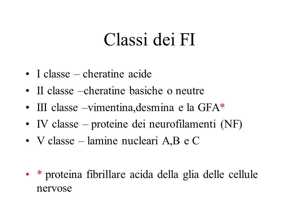 Classi dei FI I classe – cheratine acide