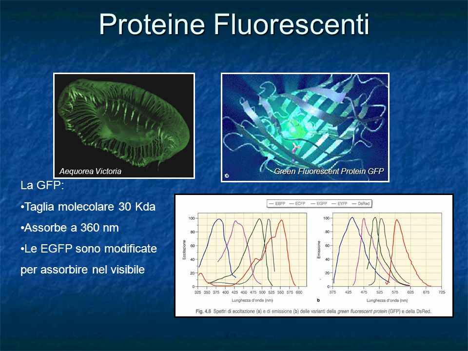 Proteine Fluorescenti