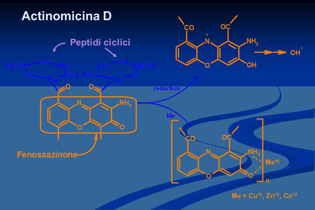 Actinomicina D Peptidi ciclici