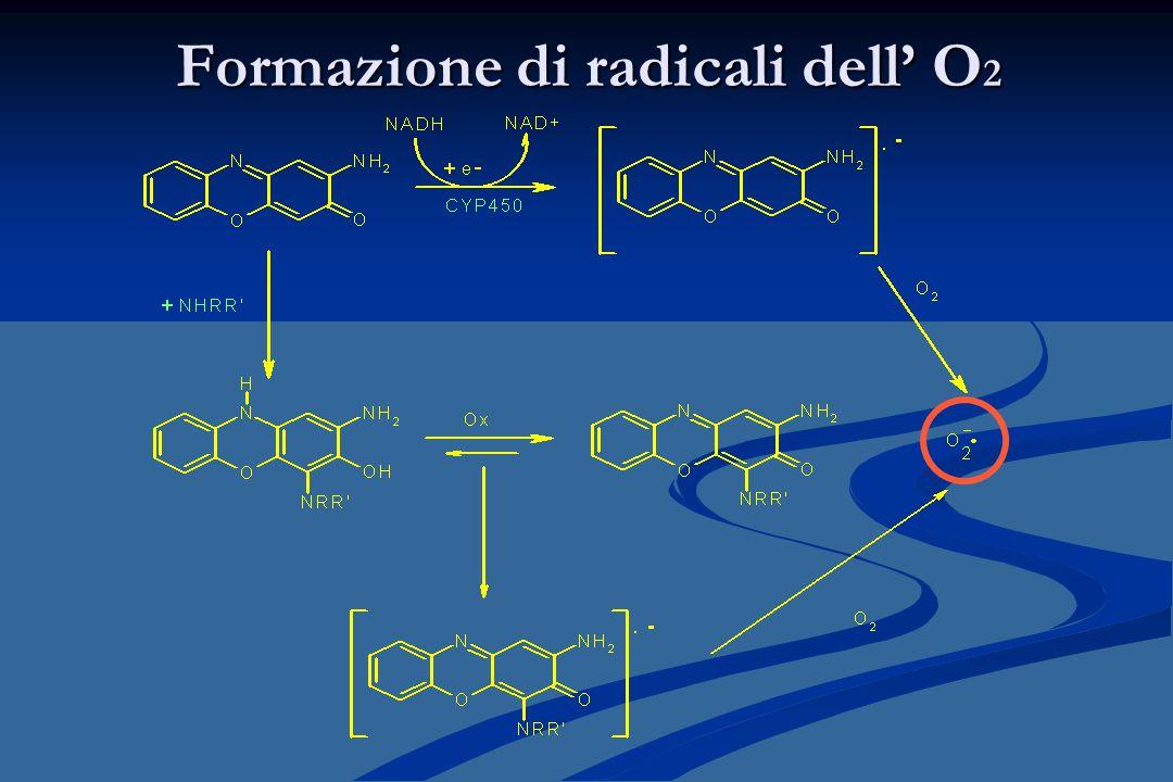 Formazione di radicali dell' O2