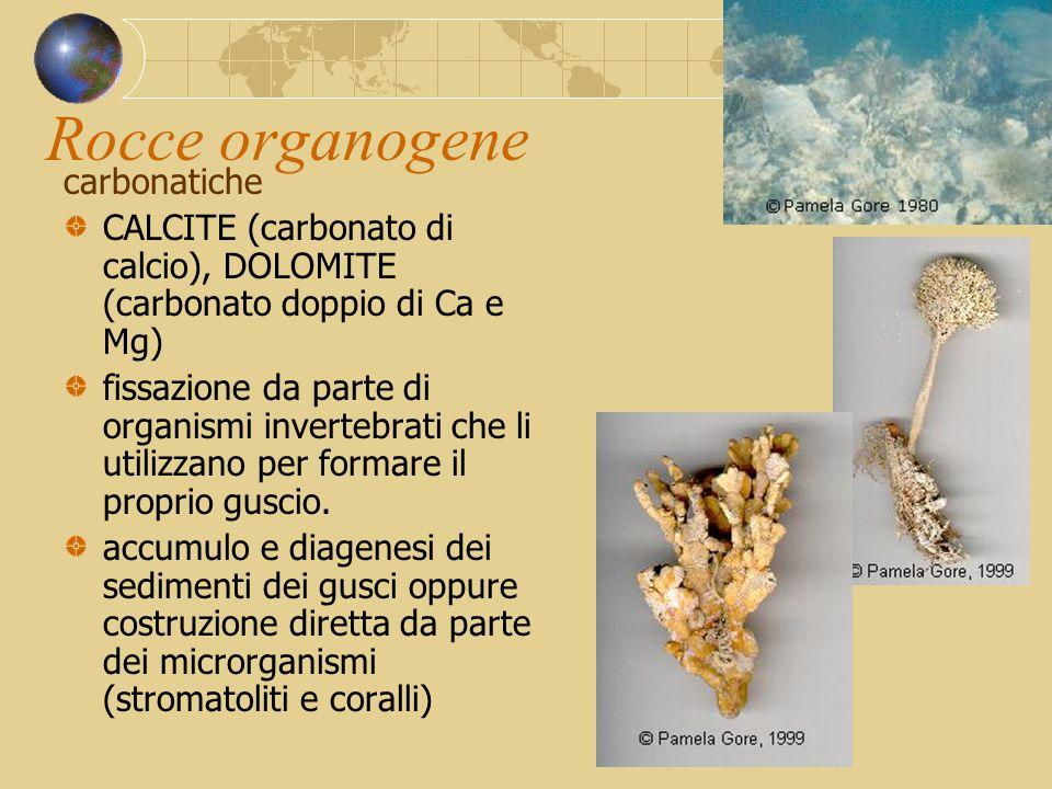 Rocce organogene carbonatiche