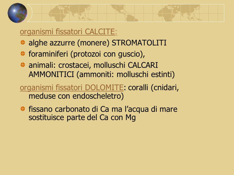 organismi fissatori CALCITE: