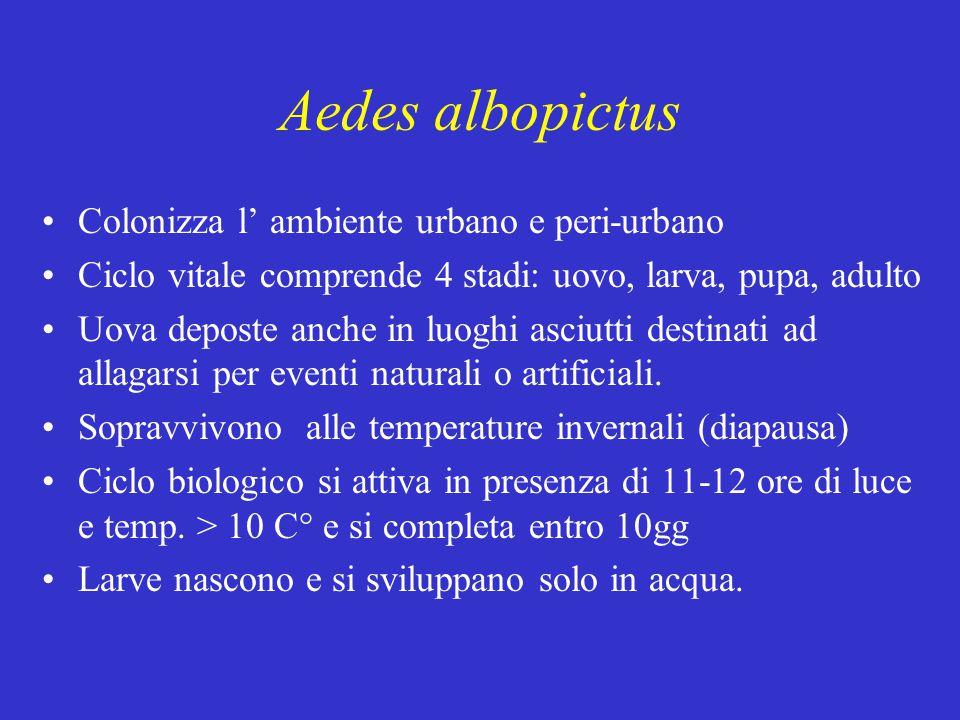 Aedes albopictus Colonizza l' ambiente urbano e peri-urbano