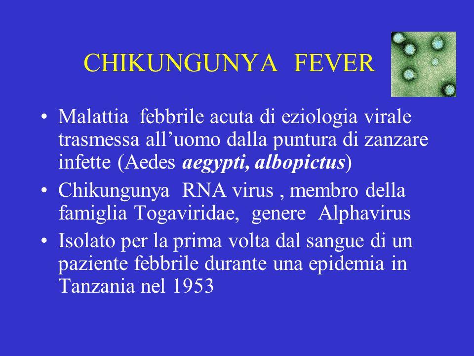 CHIKUNGUNYA FEVER Malattia febbrile acuta di eziologia virale trasmessa all'uomo dalla puntura di zanzare infette (Aedes aegypti, albopictus)