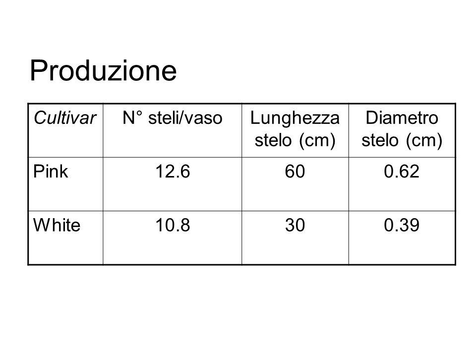 Produzione Cultivar N° steli/vaso Lunghezza stelo (cm)