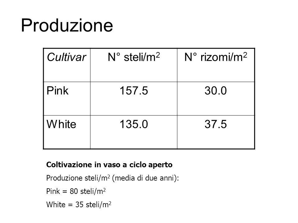 Produzione Cultivar N° steli/m2 N° rizomi/m2 Pink 157.5 30.0 White
