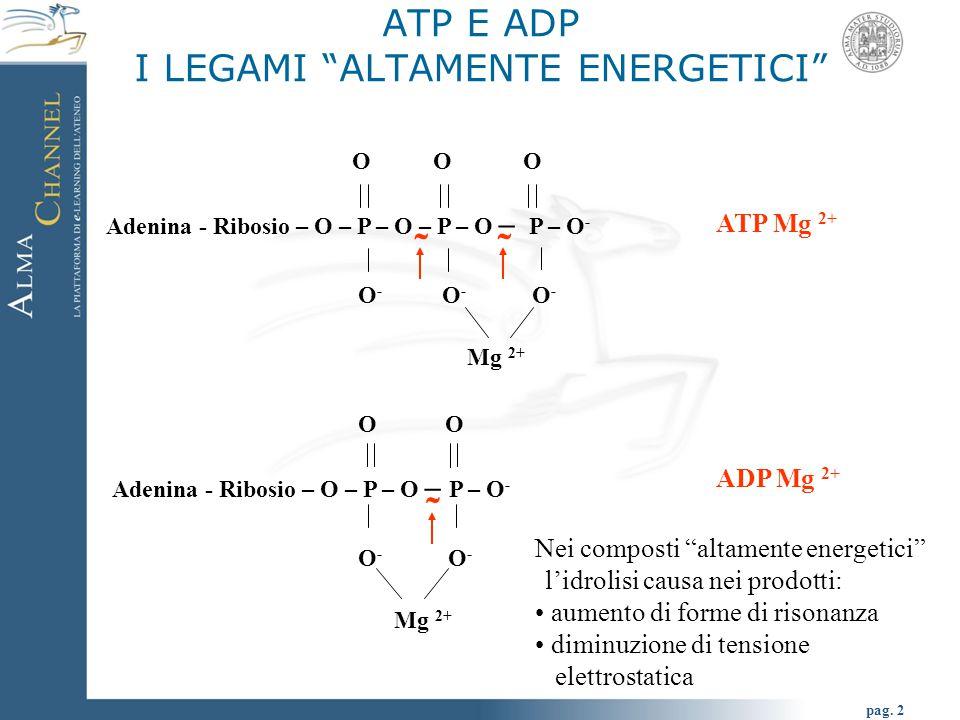 ATP E ADP I LEGAMI ALTAMENTE ENERGETICI