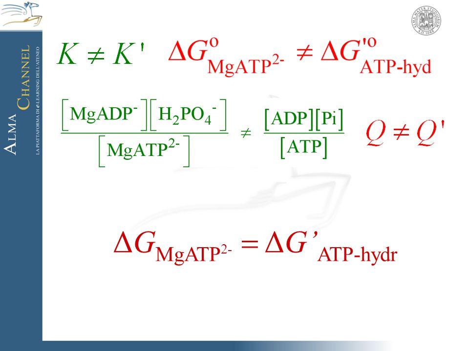 ΔGMgATP2-  ΔG'ATP-hydr