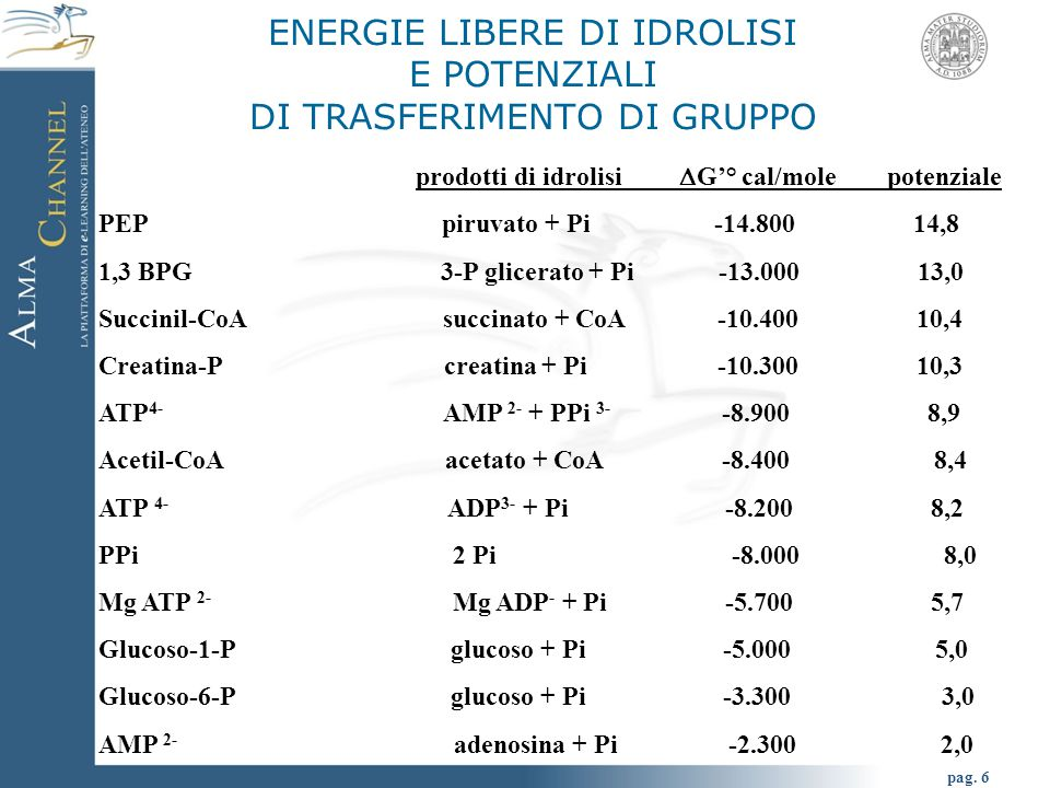 ENERGIE LIBERE DI IDROLISI E POTENZIALI DI TRASFERIMENTO DI GRUPPO