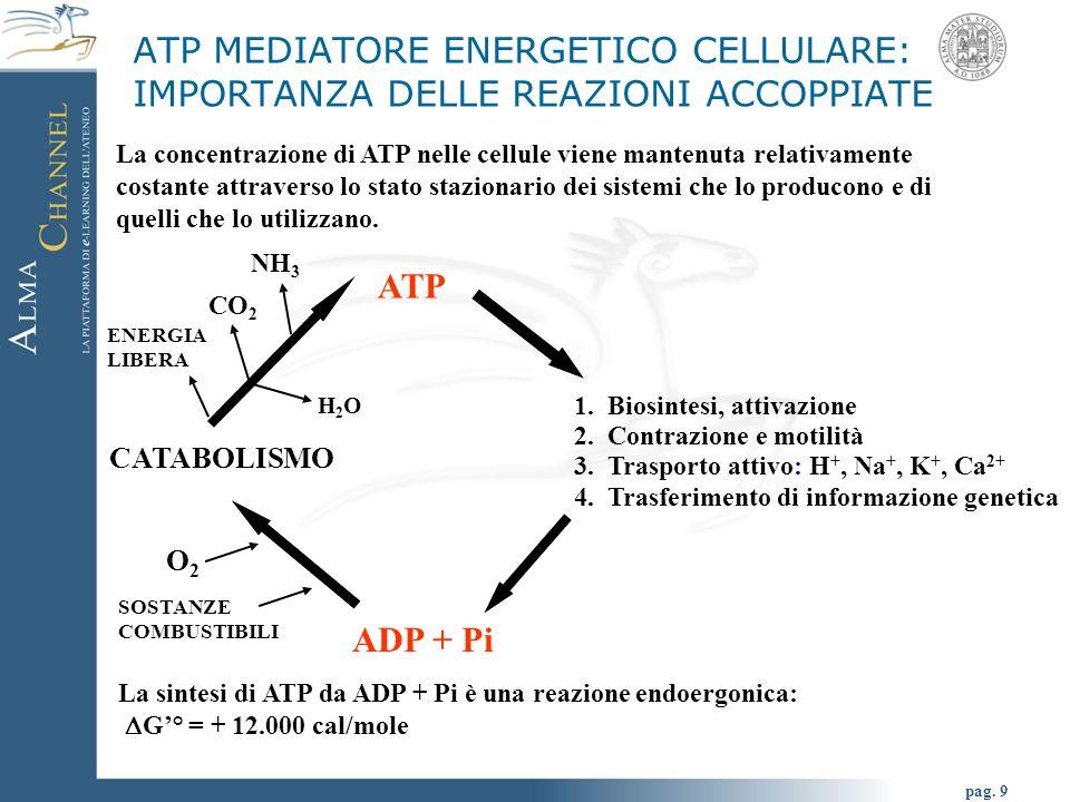 ATP MEDIATORE ENERGETICO CELLULARE: IMPORTANZA DELLE REAZIONI ACCOPPIATE
