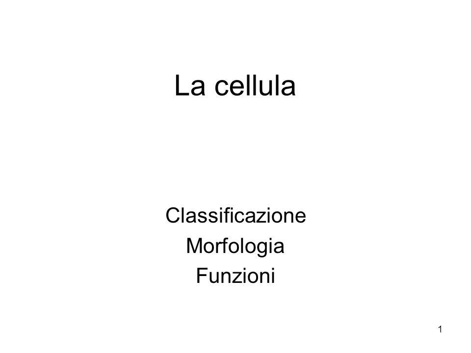 Classificazione Morfologia Funzioni