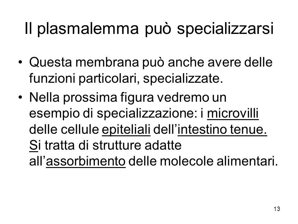 Il plasmalemma può specializzarsi