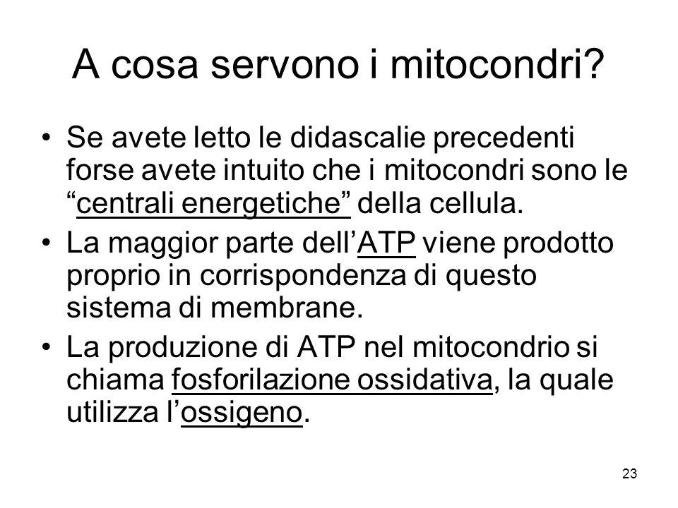 A cosa servono i mitocondri