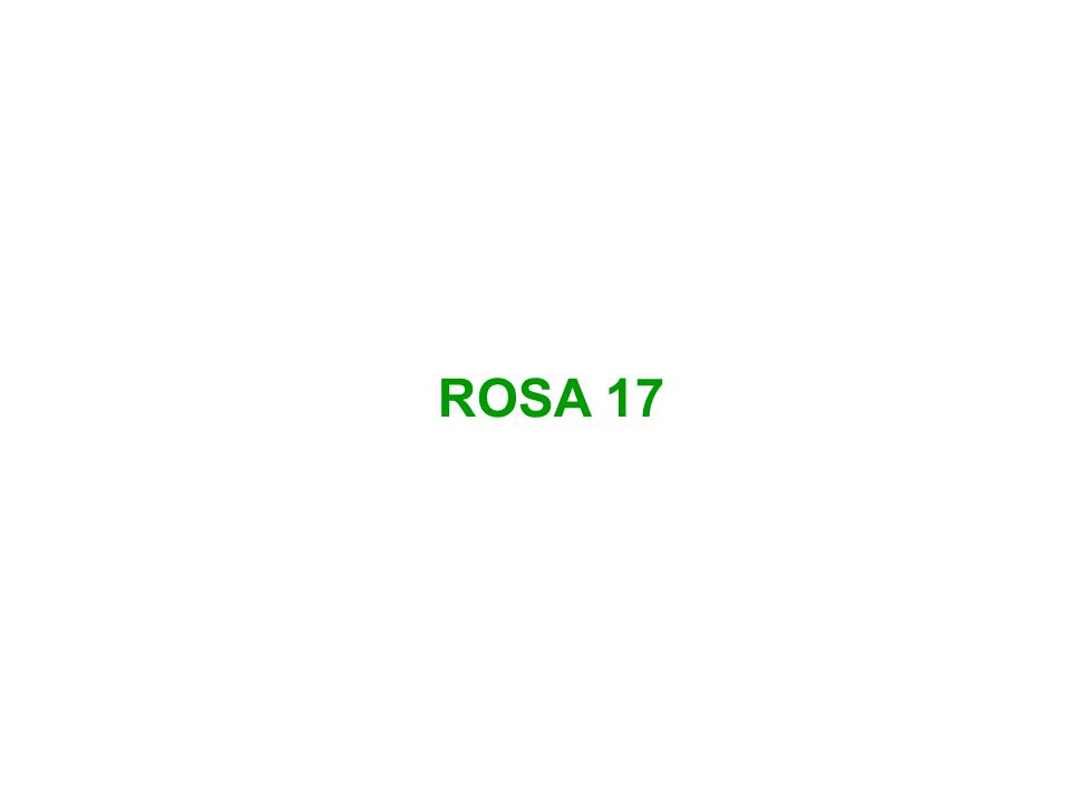 ROSA 17