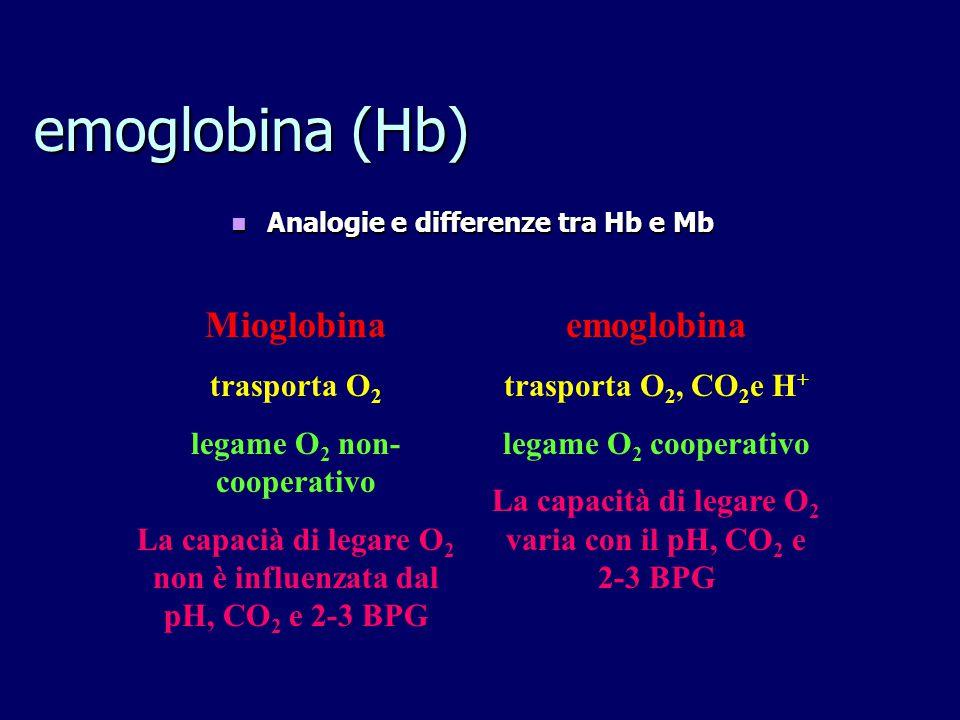 emoglobina (Hb) Mioglobina emoglobina trasporta O2