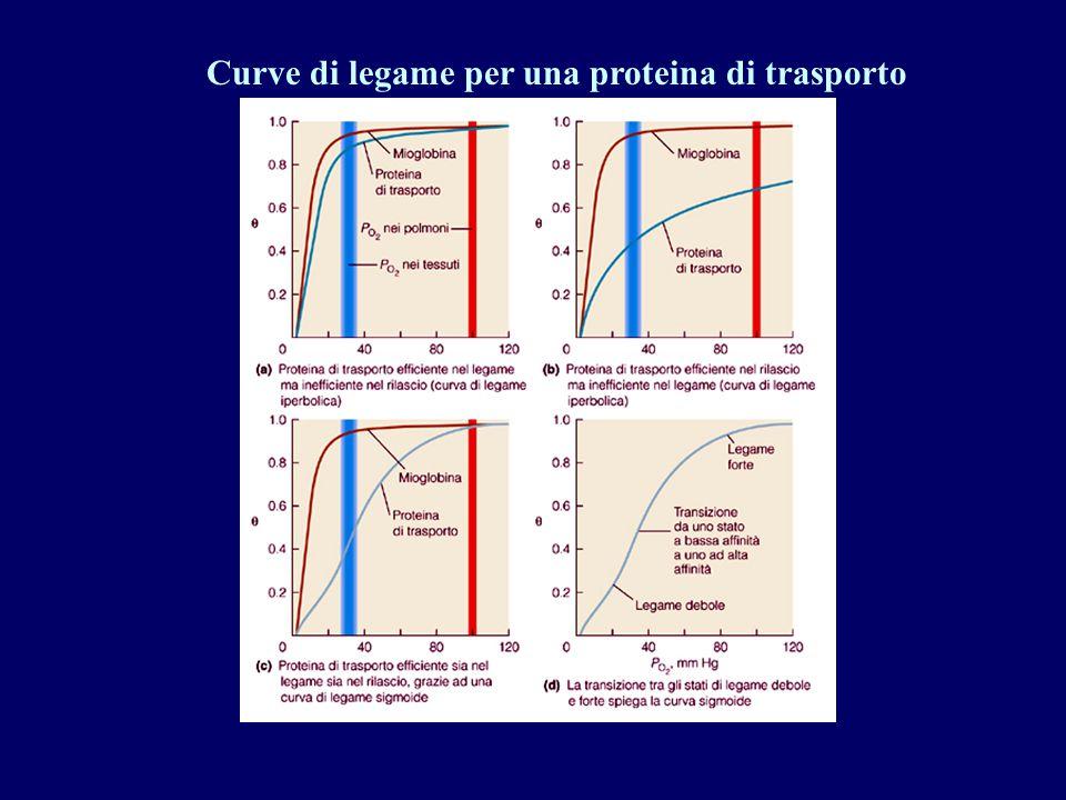 Curve di legame per una proteina di trasporto