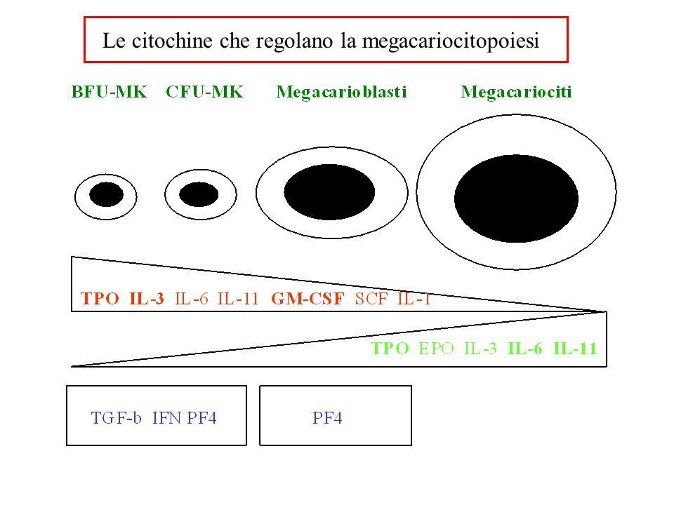 Le citochine che regolano la megacariocitopoiesi