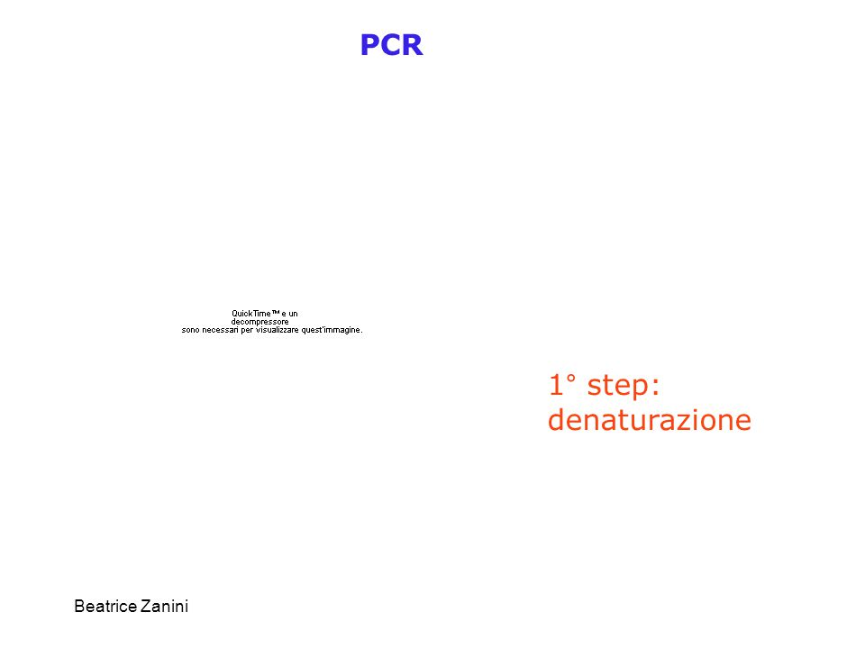PCR 1° step: denaturazione Beatrice Zanini
