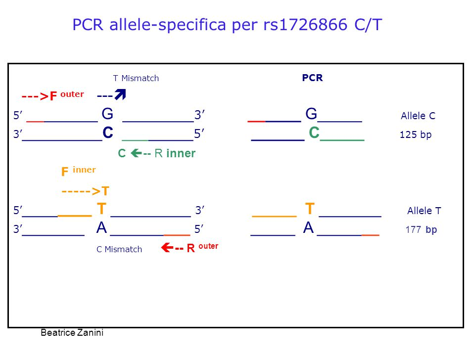 PCR allele-specifica per rs1726866 C/T