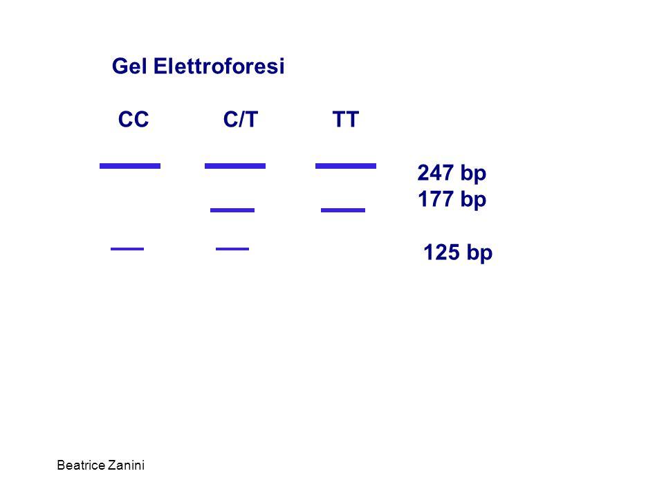 Gel Elettroforesi CC C/T TT 247 bp 177 bp 125 bp Beatrice Zanini