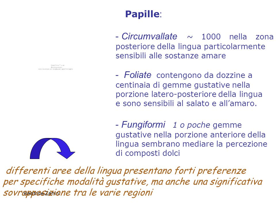 differenti aree della lingua presentano forti preferenze