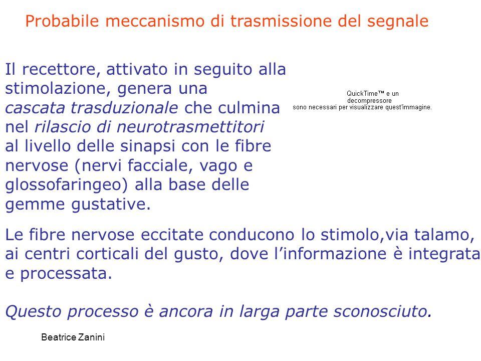 Probabile meccanismo di trasmissione del segnale