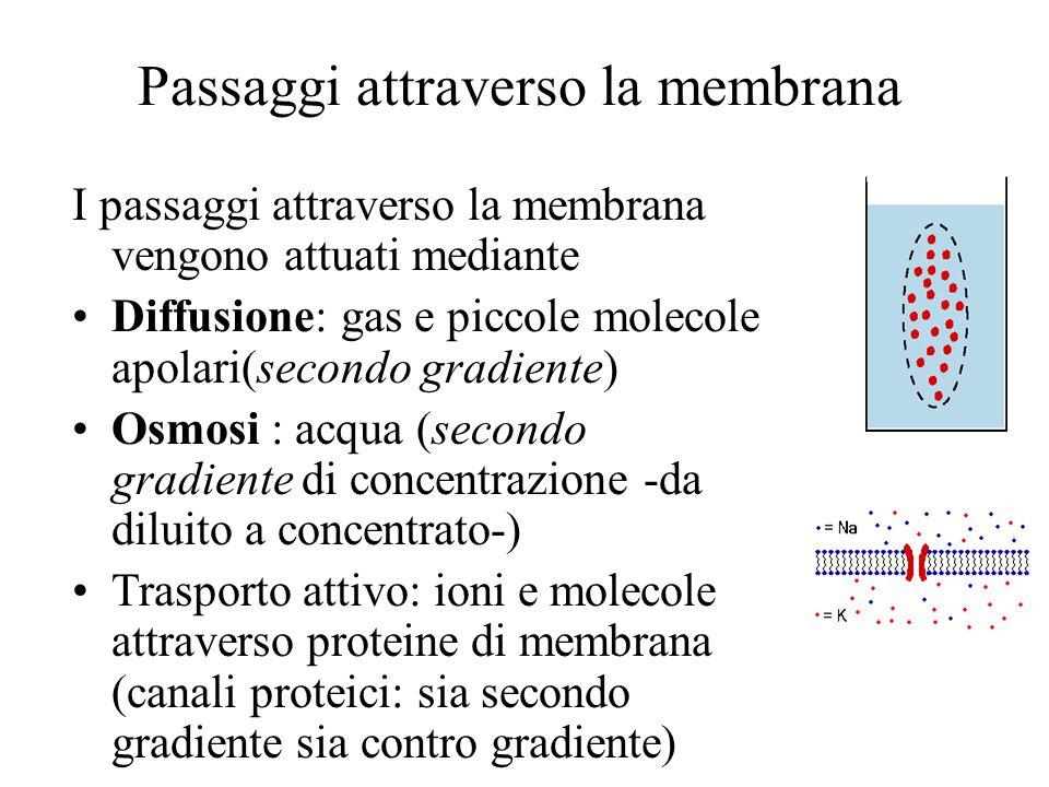 Passaggi attraverso la membrana