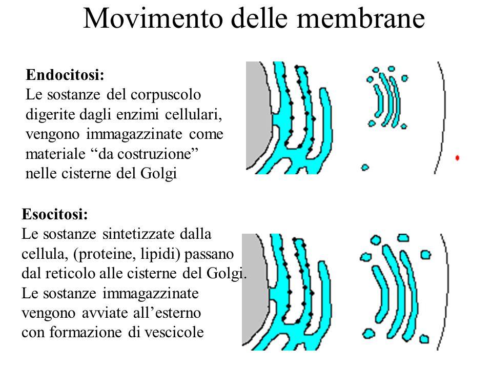 Movimento delle membrane
